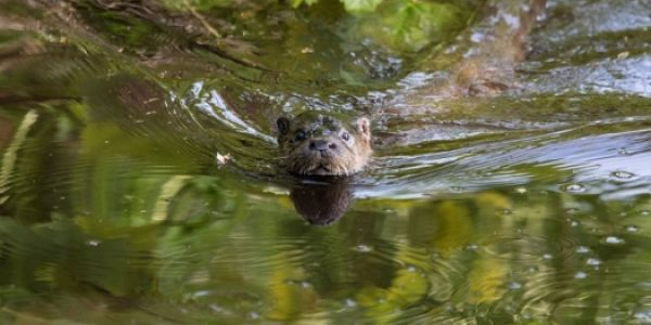 Otter Spotting & Wildlife